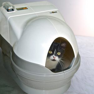 best automatic litter box for large cats