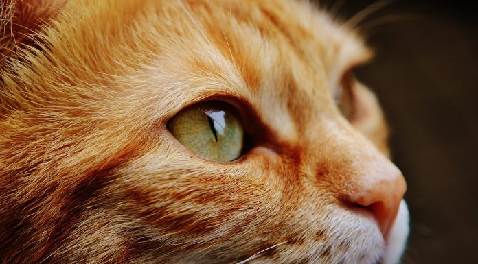 cat flatulence