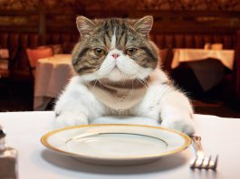 human foods that cats can eat