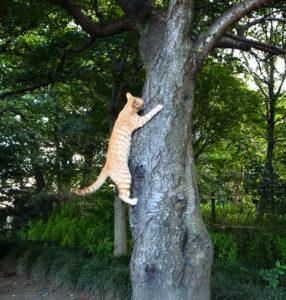cat climbing a tree