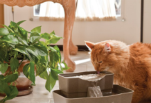 best cat fountain