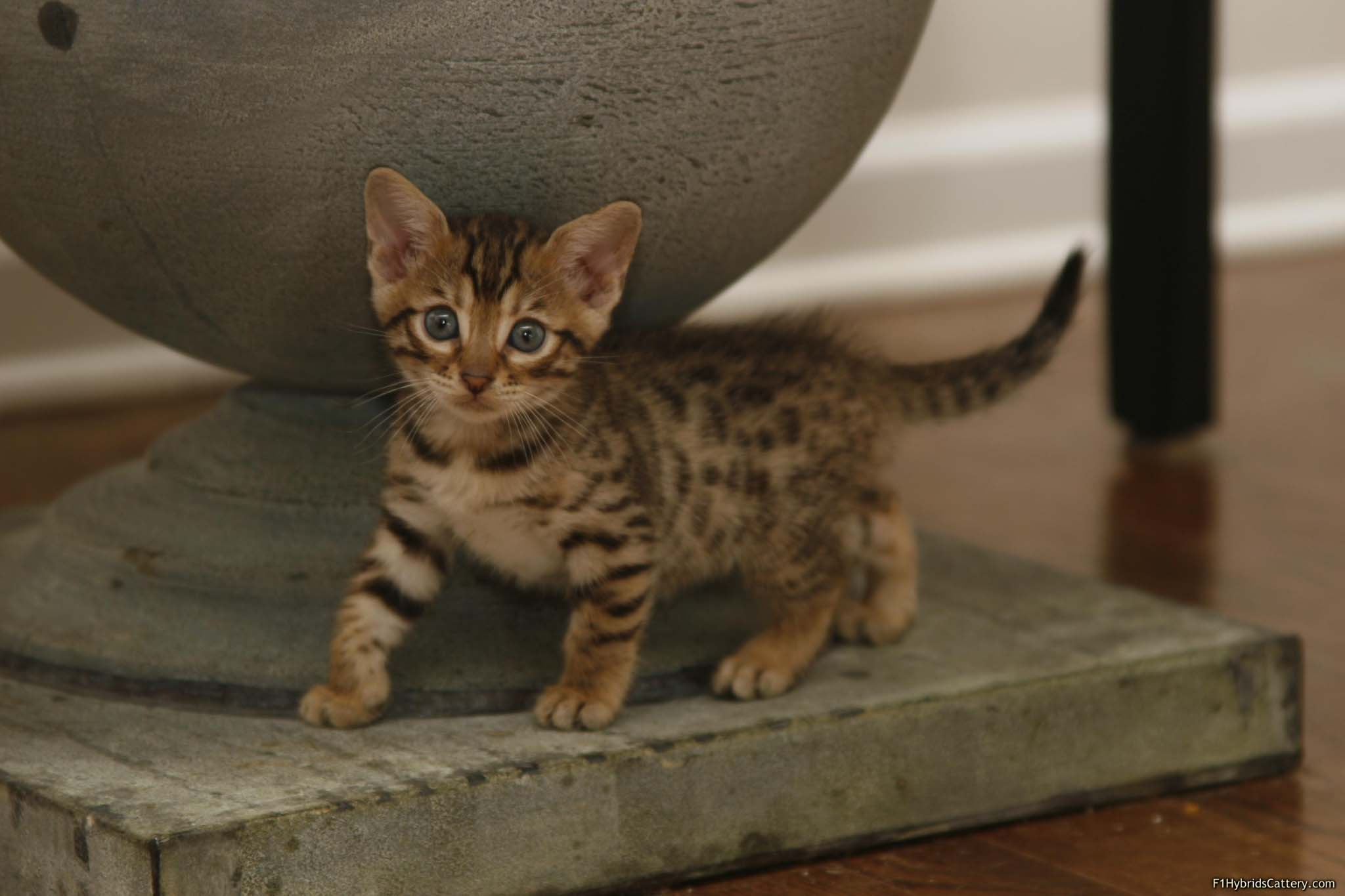 Are These The UK's Greatest Cat Names? - Cat Concerns