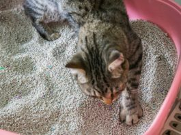 cat peeing outside litter box
